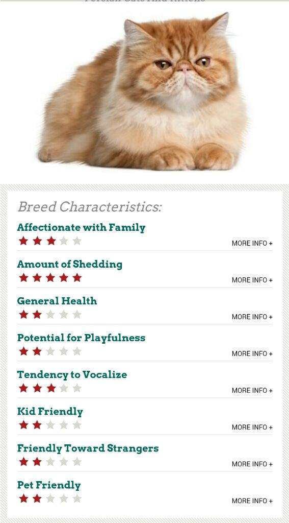 Persian Cat Wiki Cats Amino