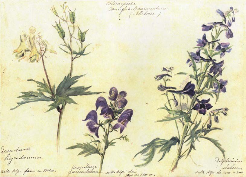 how to make aconite poison