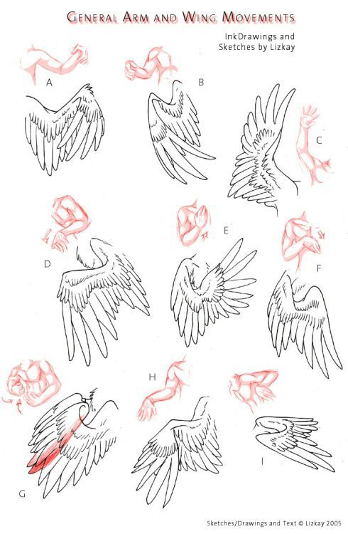 How To Draw Wings Art For Beginners Amino