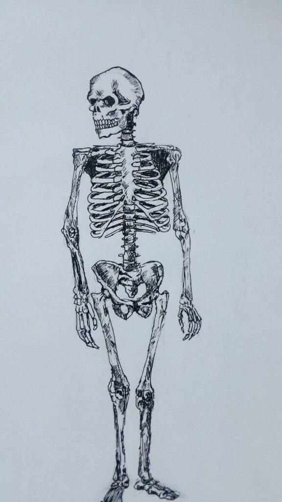 Estudios de anatomia | •Arte Amino• Amino
