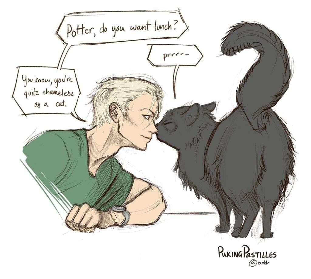 последнее картинки кошка и гарри поттер быть, удастся найти