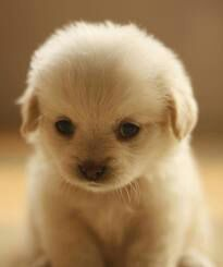 Image Cute Puppies Images Puppy Wallpaper And Background Photos