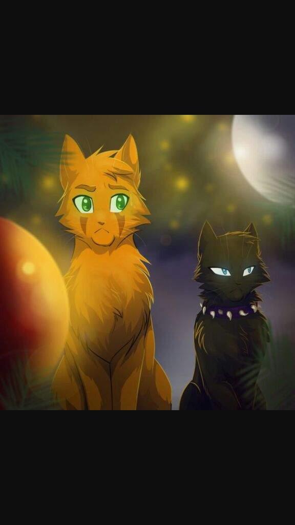 warrior theories warrior cats amino amino