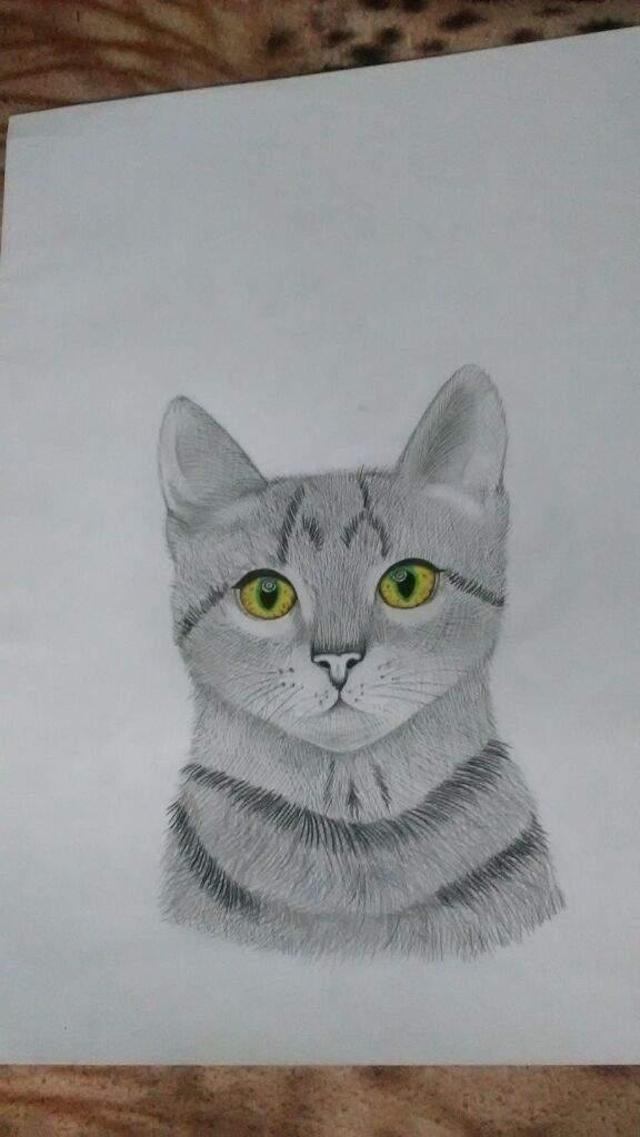 Gato Arte Amino Amino