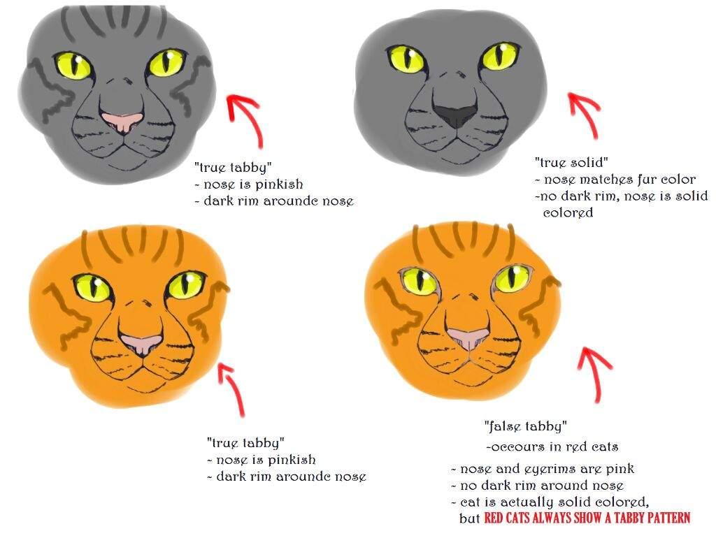 Cat Genetics Facts And Hacks Warriors Amino