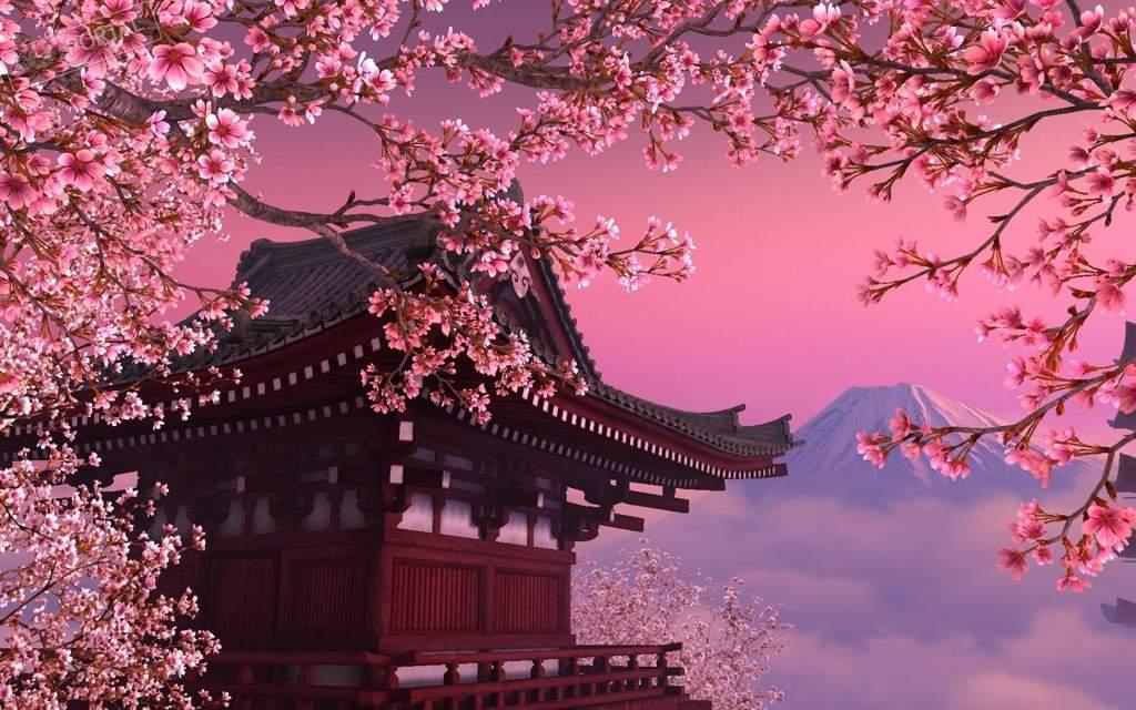 картинки сакуры дерева