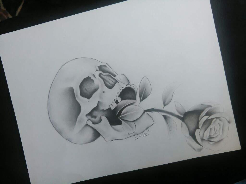 Calavera Y Rosa Arte Amino Amino