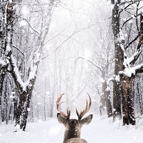 Image result for snow aesthetic