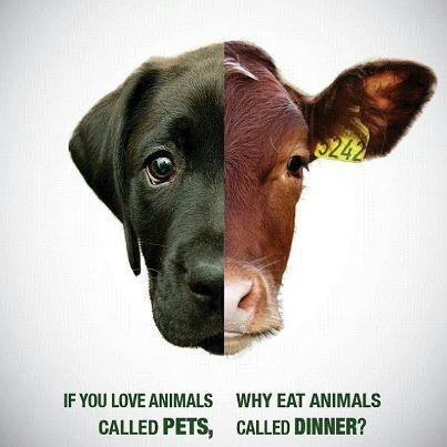 Image result for vegan the difference