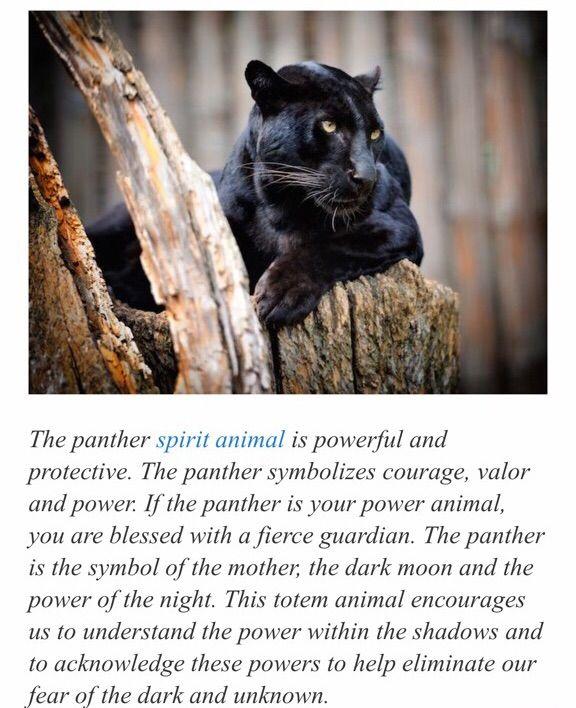 Spirit Animals A Weekend Challenge Supernatural Amino