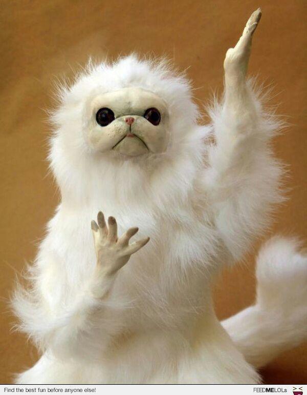 Stuffed Persian Cat Meme