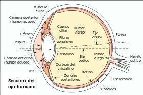 Recorrido de un rayo de luz en el ojo!   •Ciencia• Amino