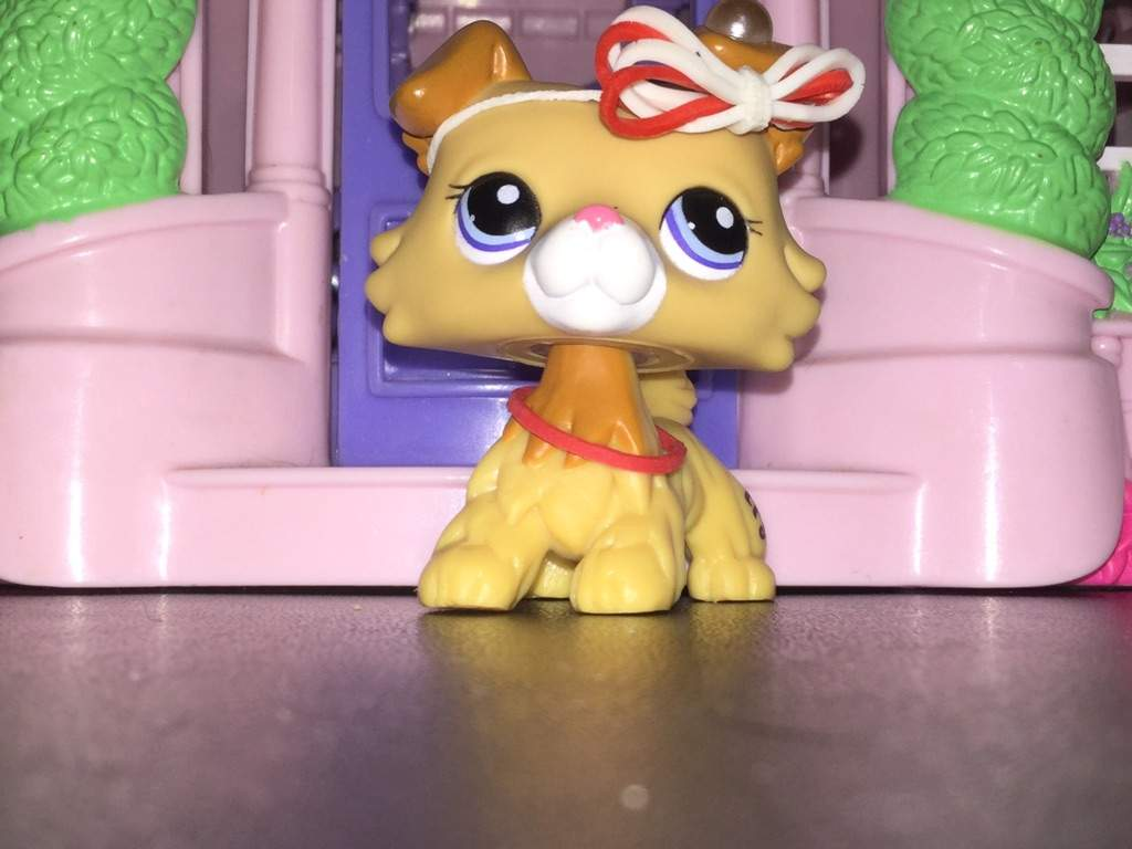 Names For This Lps Collie Its A Girl Lps Amino