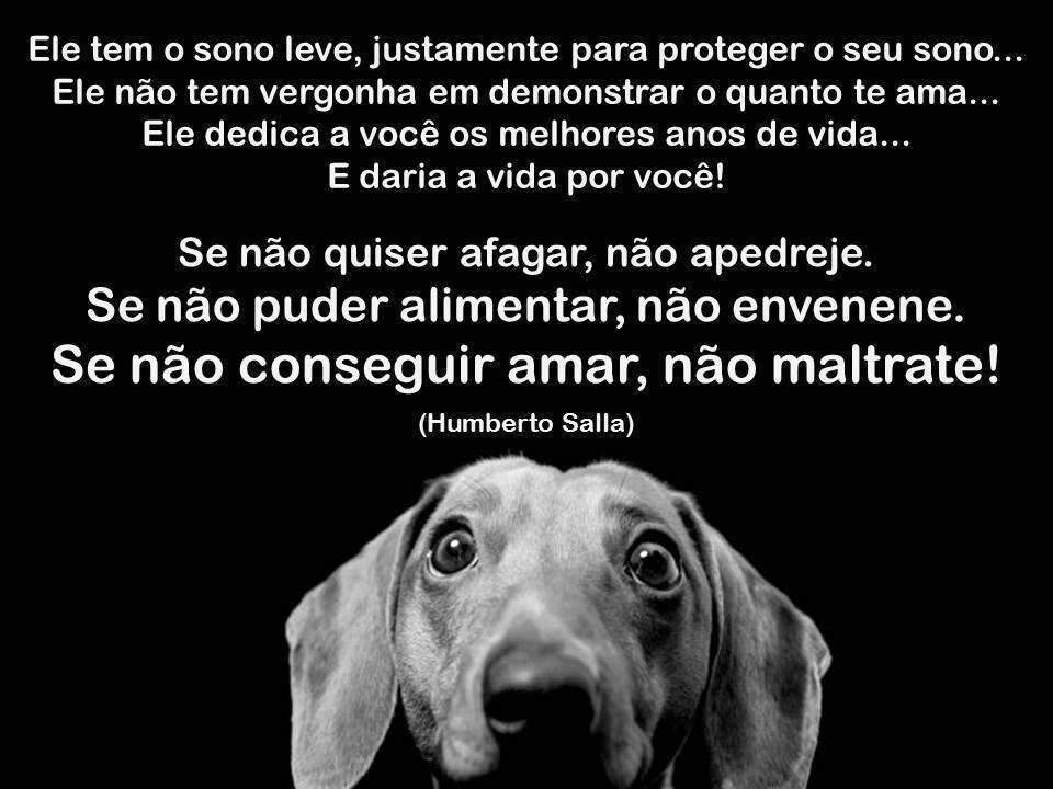 Fabuloso Frases encantadoras sobre os cachorros | 🌎 Mundo Animal 🐯 Amino UC25