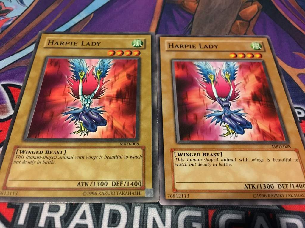 Harpie Lady Duel Amino