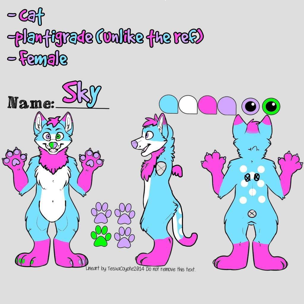 Sky the Cat\'s Reference sheet | Furry Amino