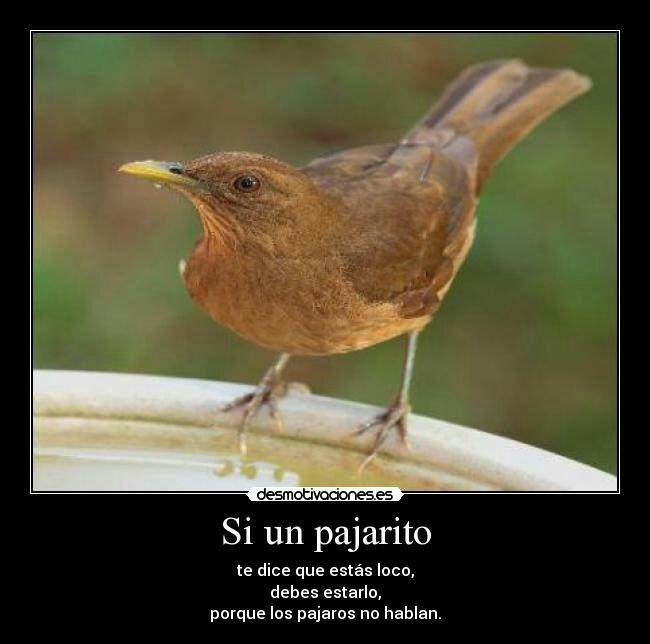 Aves Chistosas Birdorable Birds Amino
