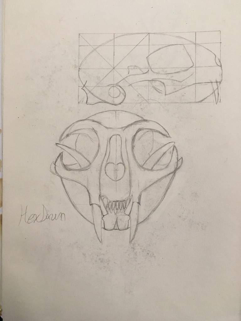Cat Skull Anatomy Warriors Amino