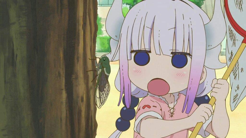 Protect Kanna  I swear it  | Anime Amino