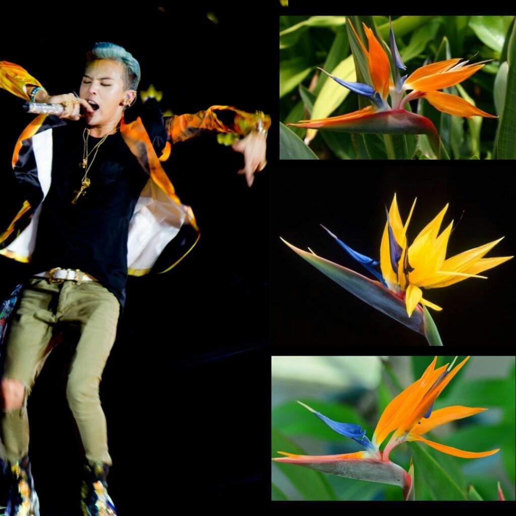 Bird of paradise big bang amino amino symbolism of the bird of paradise buycottarizona