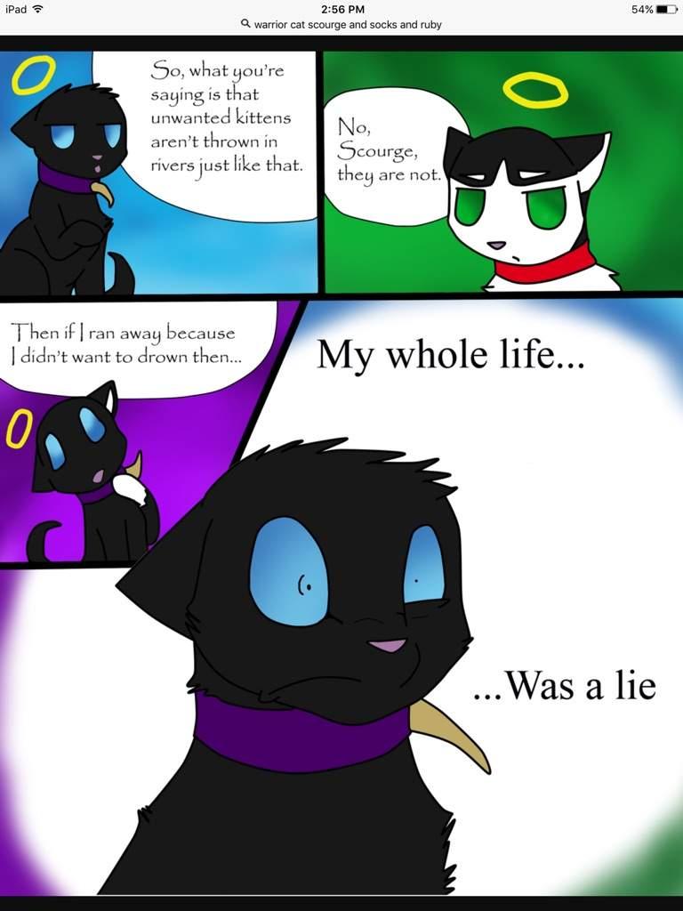 Cat Memes Warriors Amino