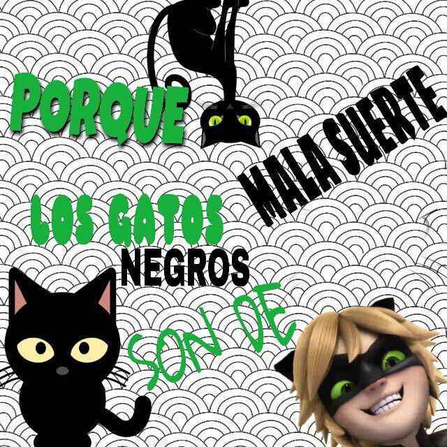 PORQUE LOS GATOS NEGROS SON DE MALA SUERTE | •Miraculous Ladybug ...