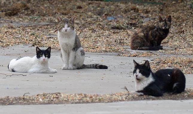 How long do stray cats live