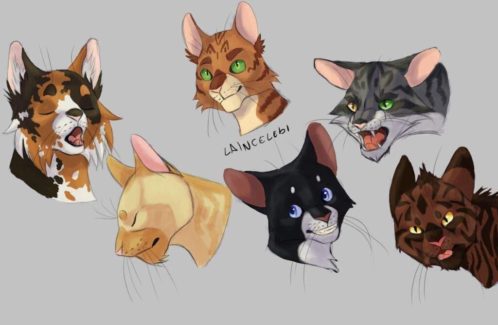 Style Studies Warrior Cats Amino Amino