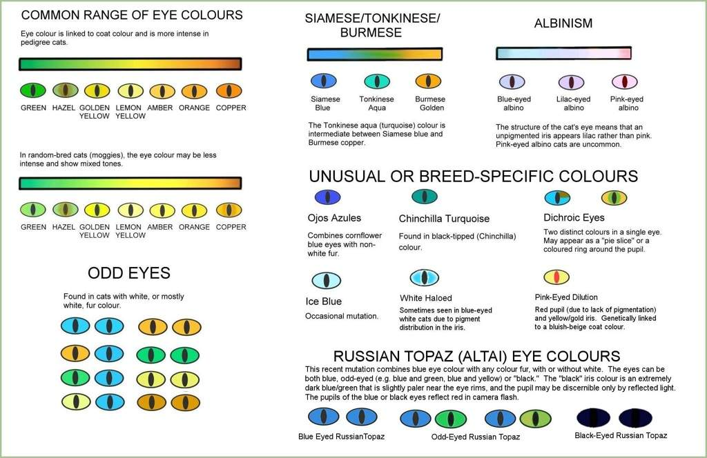 Epidemiology: Eye Pigmentation | Warriors Amino