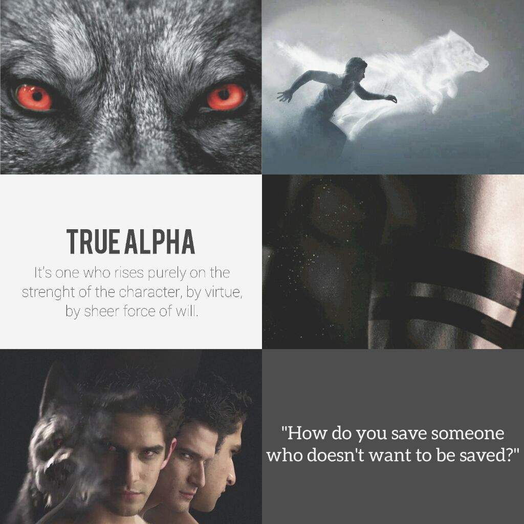 What is a true alpha wolf