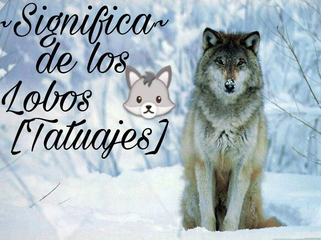 Significa De Los Lobos En Tatuajes Love Tattoos Amino