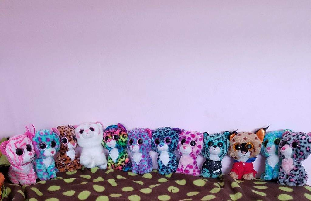 My whole beanie boo collection!  6c88209ca0c