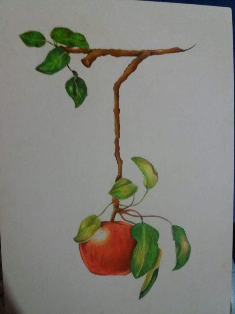 Manzana realista | DibujArte Amino