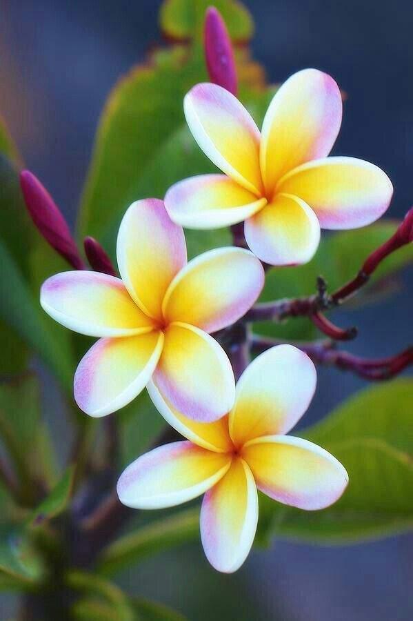 As 10 Flores Mais Belas Do Mundo Verbalizando Amino