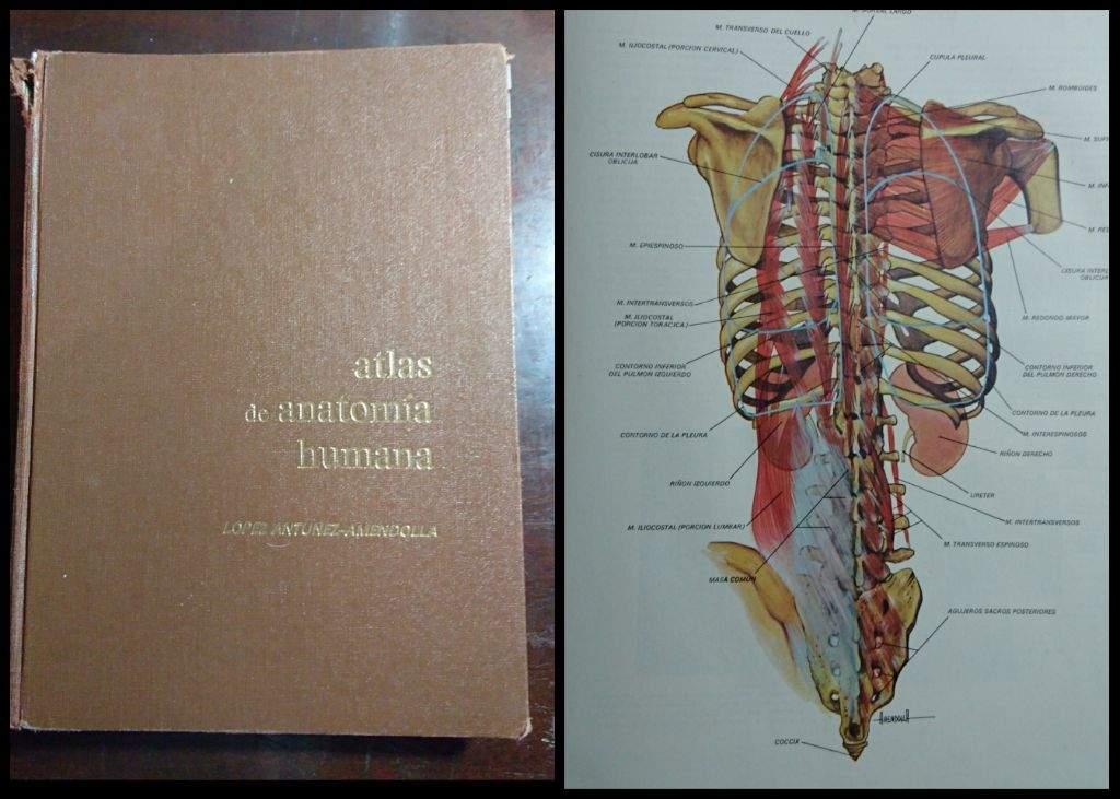 Recomendaciones y consejos para libros de medicina (1er semestre/año ...