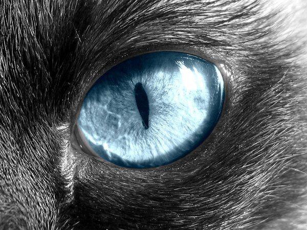 Cat eyes anatomy
