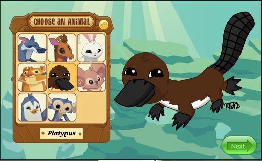 Pet Platypus Worth Aj - Various Kinds Of Pet