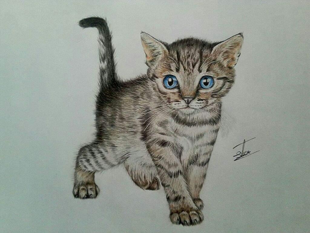 Gatito 😻 | •Arte Amino• Amino