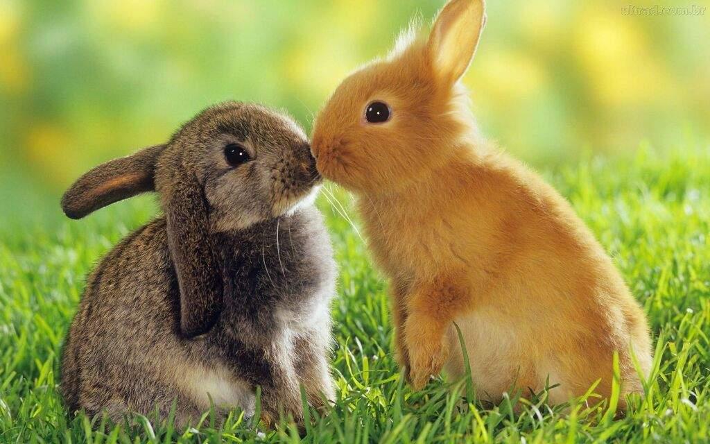 Amado 10 animais mais fofos do mundo | 🐾 Pets Em Geral 🐾 Amino XP98