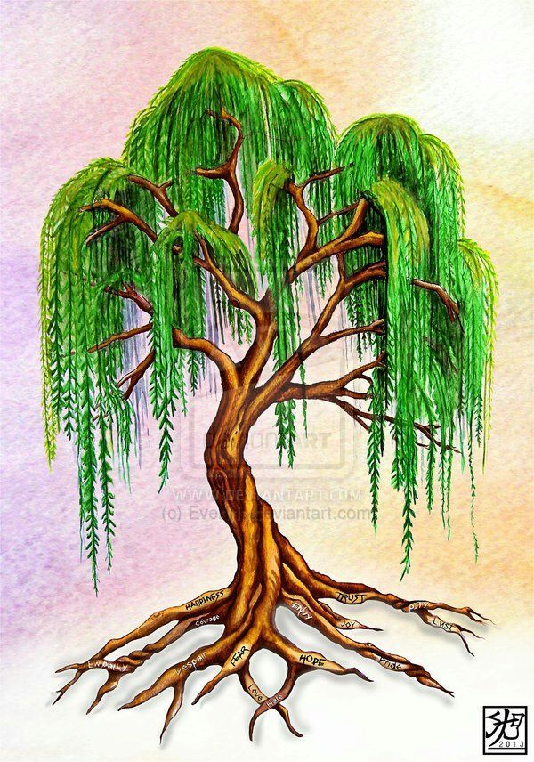 Wand Wood Willow Is Known As The Tree Of Emotion And Love
