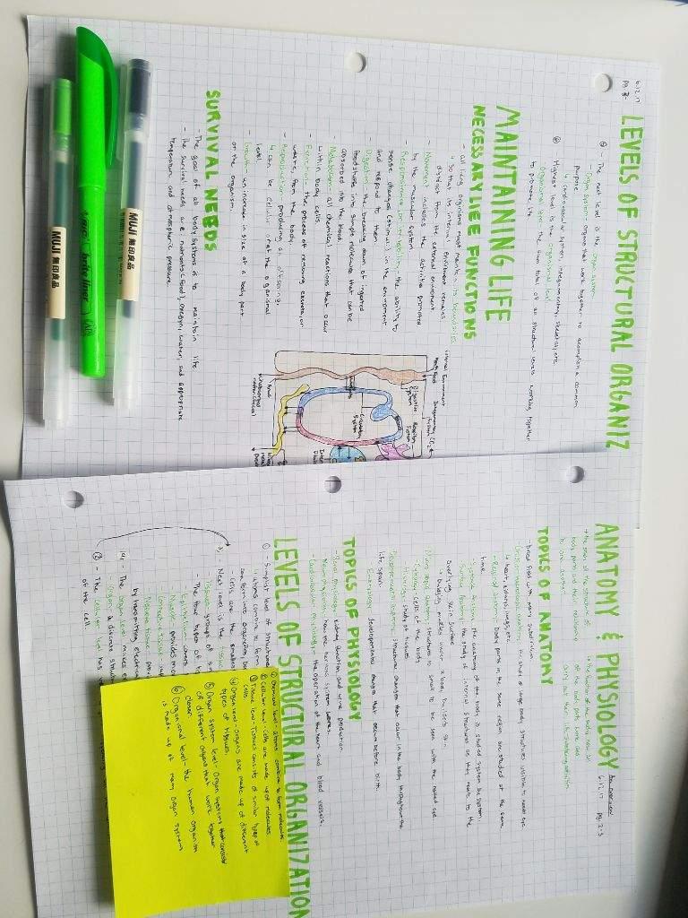 My Notes Studying Amino Amino
