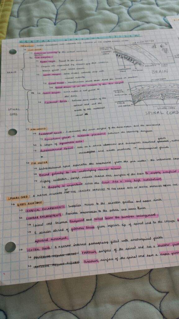 Human Anatomy and Physiology Notes | Studying Amino Amino