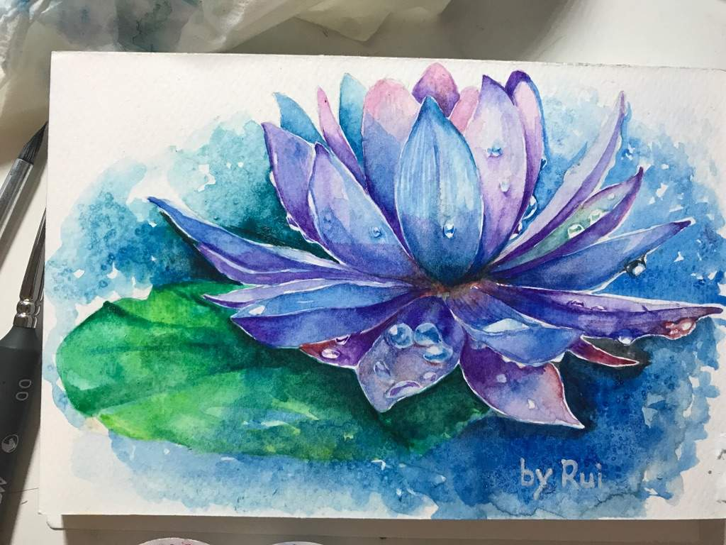 Water lily watercolour art amino my friend asked me to draw a water lily tattoo design here is the draft izmirmasajfo