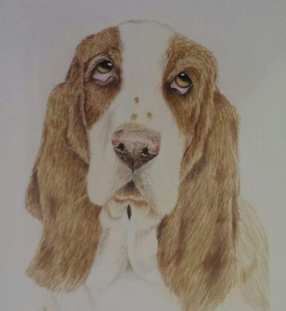 Dibujo De Perro A Lápiz De Color Arte Amino Amino
