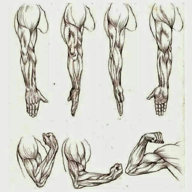 Tutorial: anatomia de brazo | Arte & caos Amino
