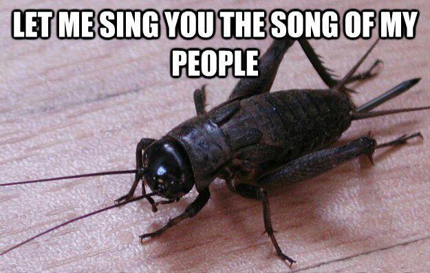 sound of crickets meme