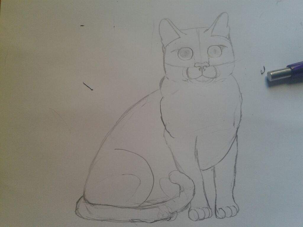 Como Desenhar Um Gato Retrato De Minha Gatinha