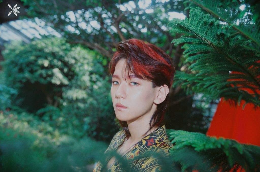 Baekhyun's Mullet Appreciation Post | K-Pop Amino