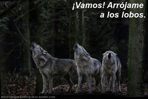 Frases De Un Lobo Chic At S Lobo Amino Amino