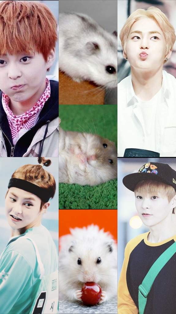 Exo Cute Wallpapers Og 12 As Animals Wallpapers Exo 엑소 Amino